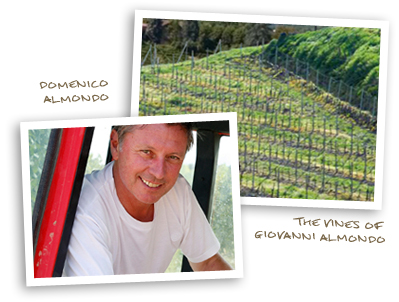Domenico Almondo & The Vines of Giovanni Almondo
