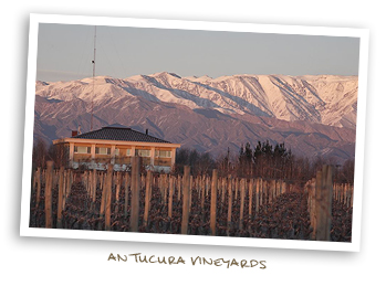 Antucura Vineyards