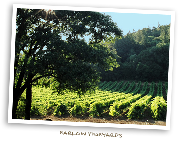 Barlow Vineyards