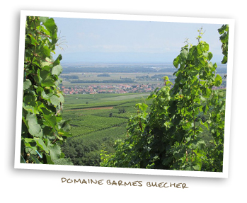 Domaine Barmes Buecher