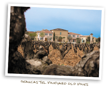 Beaucastel Vineyard Old Vines