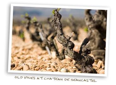 Old Vines at Chateau de Beaucastel