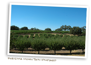 Purisima Mountain Vineyard