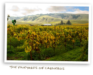 The Vineyards of Carneros
