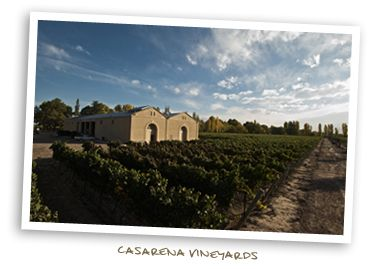 Casarena Vineyards
