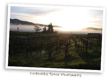 Cornerstone Vineyardw