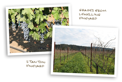 Grapes from Lewelling Vineyard and Stanton Vineyard