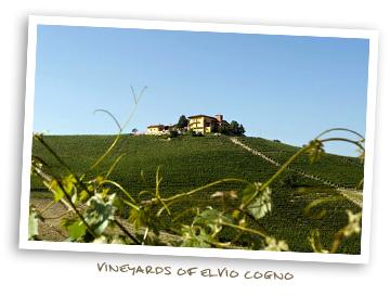Vineyards of Elvio Cogno