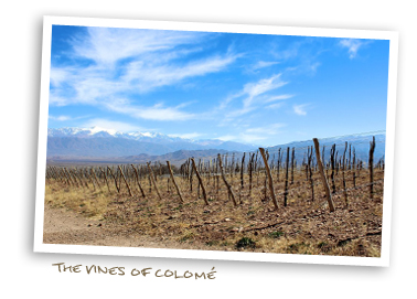 The Vines of Colomé