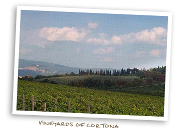 Vineyards of Cortona