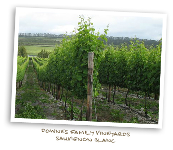Downes Family Vineyards Sauvignon Blanc