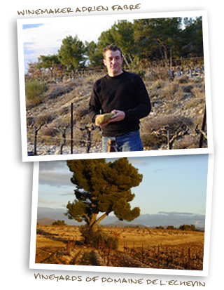 Winemaker Adrien Fabre and the Vineyards of Domaine de l'Echevin