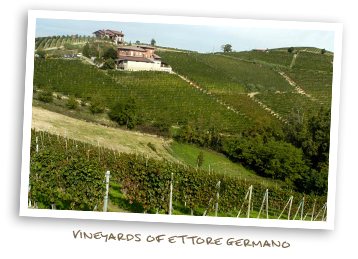 Vineyards of Ettore Germano