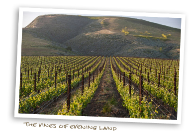The Vines of Evening Land