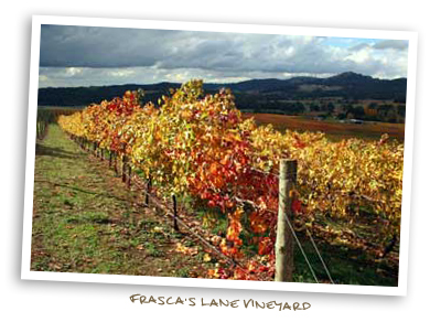 Frasca's  Lane Vineyard