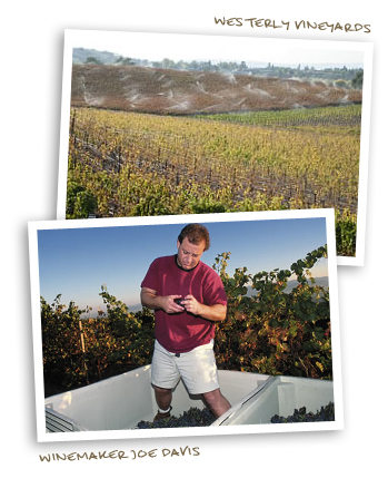 Winemaker Joe Davis and Westerly Vineyards