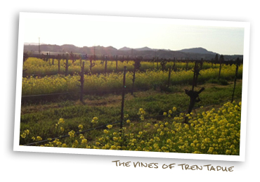 The Vines of Trentadue