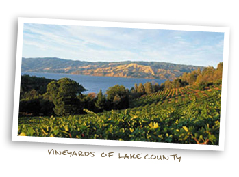 Vineyards of Lake County