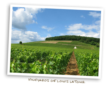 Vineyards of Louis Latour