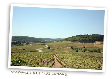 Vineyards of Louis Latour