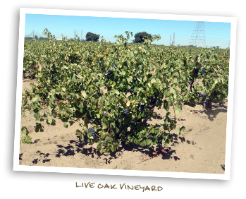 Live Oak Vineyard