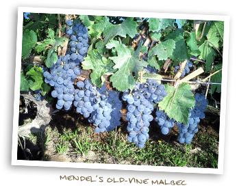 Mendel's Old-Vine Malbec