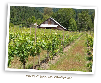Maple Ranch Vineyards