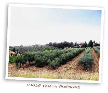 Mazzei Family Vineyards