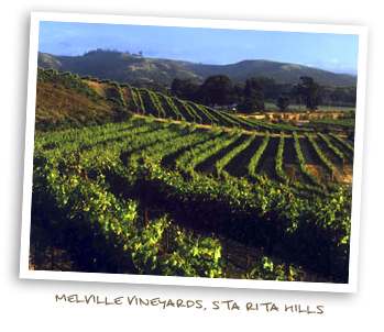 Melville Vineyards, Sta. Rita Hills