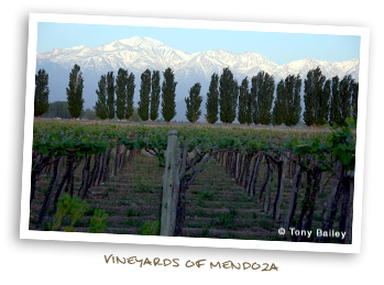 Vineyards of Mendoza