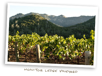 Monitor Ledge Vineyard
