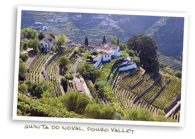 Quinta do Noval, Douro Valley