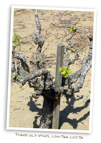 Three Old Vines, Contra Costa