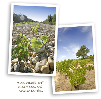 The Vines of Chateau de Beaucastel