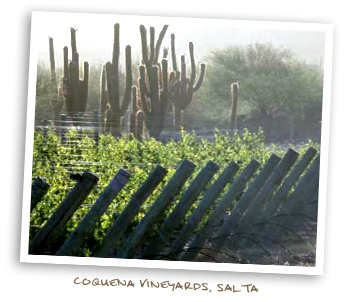 Coquena Vineyards, Salta