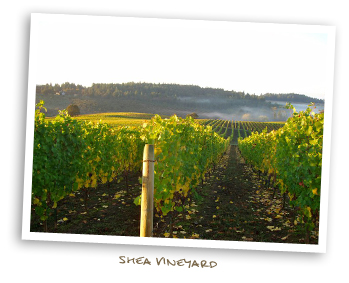 Shea Vineyards
