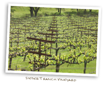 Siebert Ranch Vineyard