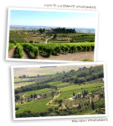 Conti Costanti Vineyards and Fuligni Vineyards