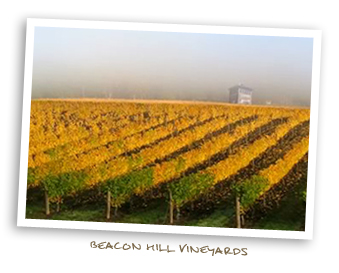 Beacon Hill Vineyards