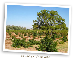 Spinelli Vineyard