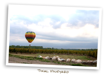Tikal Vineyards