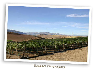 Tarras Vineyards