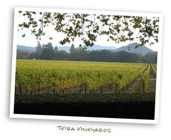 Teira Vineyards