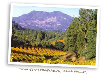 Tom Eddy Vineyards, Napa Valley