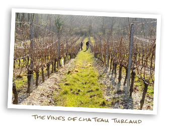 Vines of Chateau Turcaud