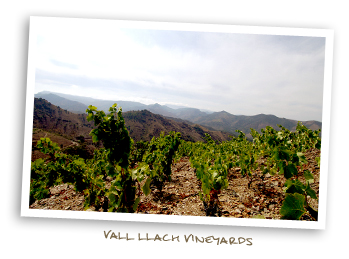 Vall Llach Vineyards