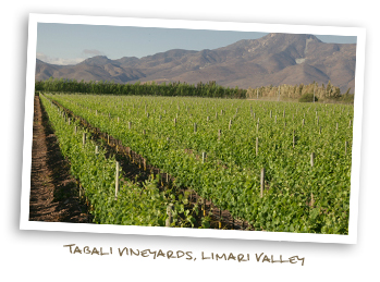 Vineyards of Vina Tabali
