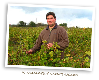 Winemaker Vincent Ricard