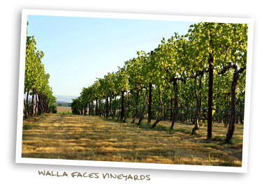 Walla Faces Vineyards