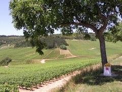 Domaine des Terres de Velle, Auxey-Duresses